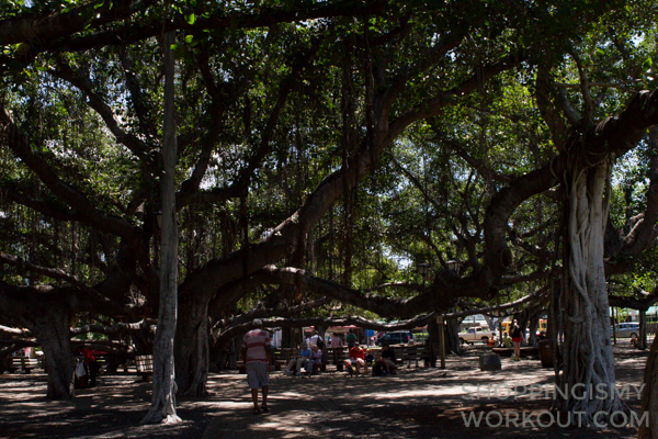 Banyan Tree Park Lahaina